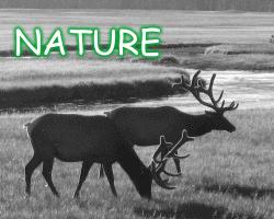 TAG Nature